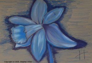 Blue Daffodil