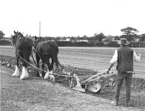 Ploughing Horses Barleylands Autumn 2015