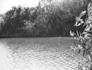 Pond Barleylands Summer 2015